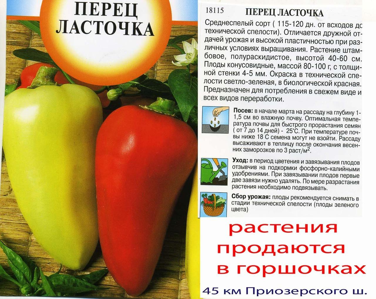 Перец атлант: описание и характеристика сорта, выращивание и урожайность с фото
