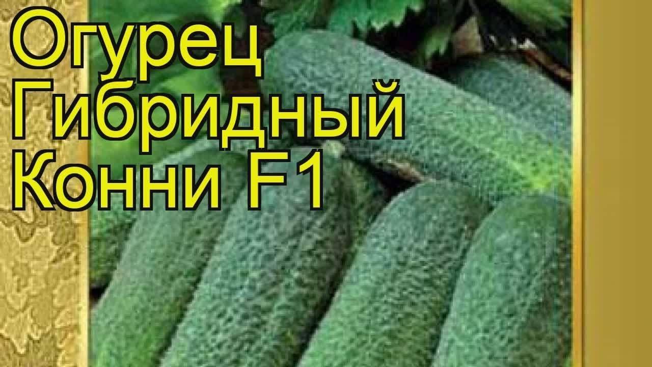 Огурец конни f1: описание сорта, фото, отзывы, выращивание, формирование куста