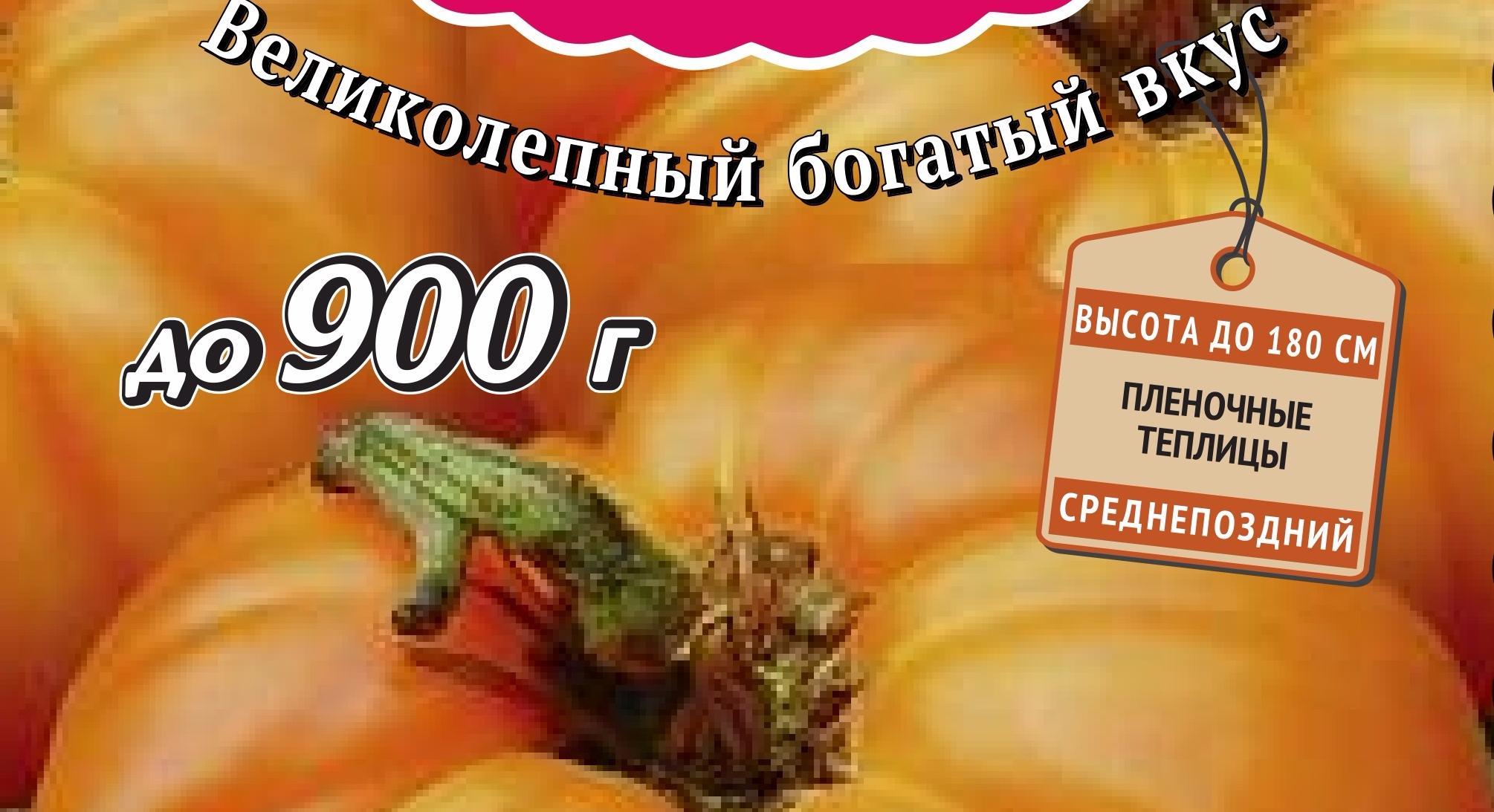 """Томат """"оранжевый гигант"""": популярный среди любителей и профессионалов в выращивании помидор"""