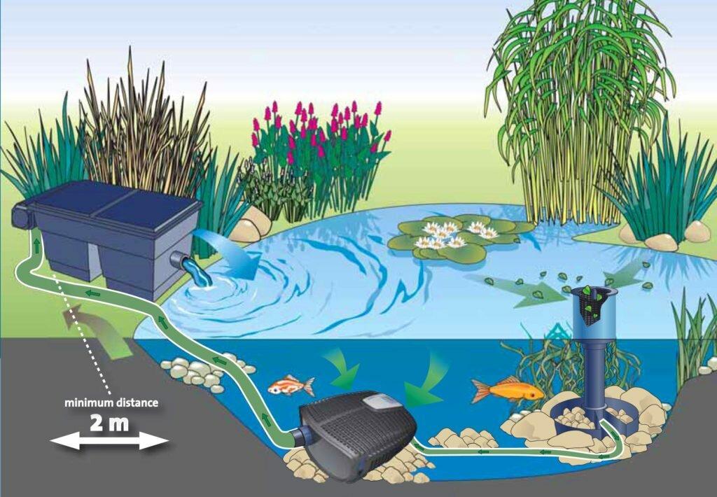 Пруд с рыбой на даче своими руками: виды, подготовка, этапы создания - morevdome.com