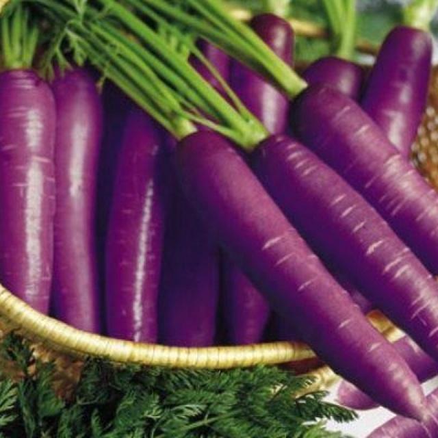Белая морковь: описание, сорта. фиолетовая морковь: описание, сорта