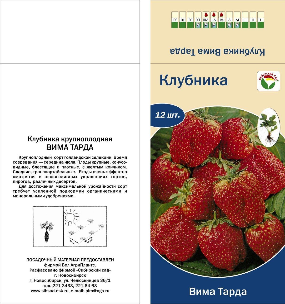 Клубника сорт вима ксима: крупноплодная и урожайная