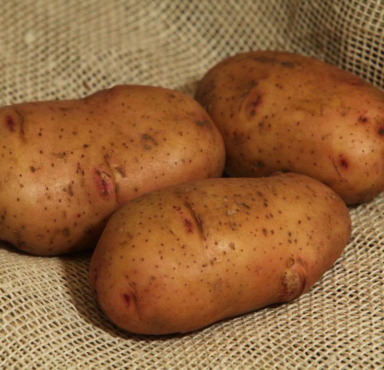 Старейший из сортов: картофель лорх