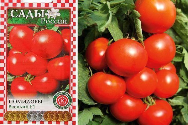 Описание скороспелого томата Василий и агротехника культирования гибридного сорта