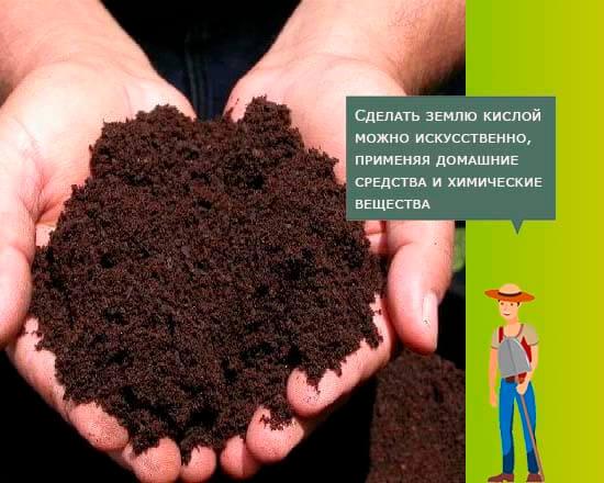 Кислотность почвы для голубики садовой