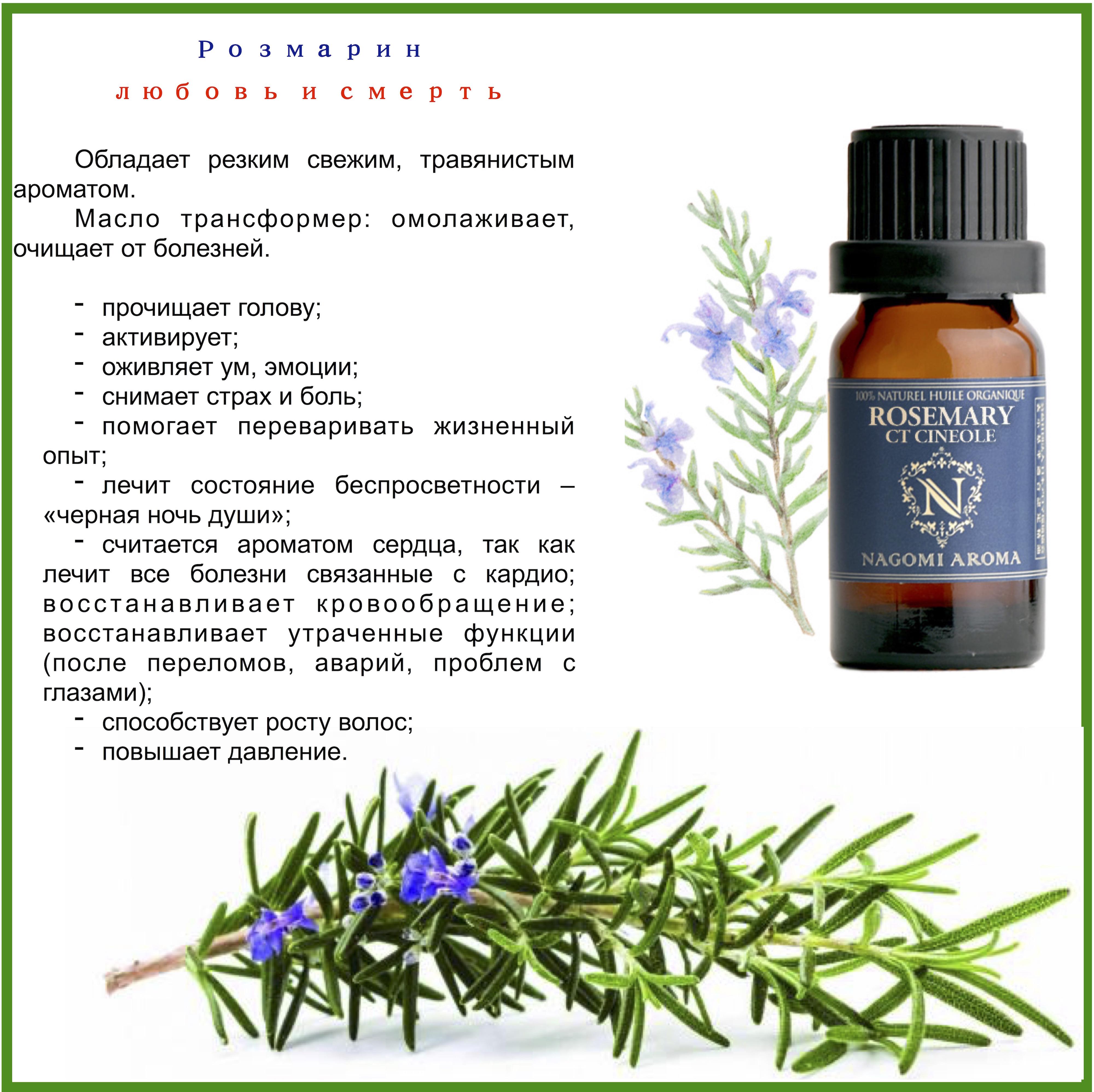 Розмарин — лечебные свойства и противопоказания, польза и вред травы