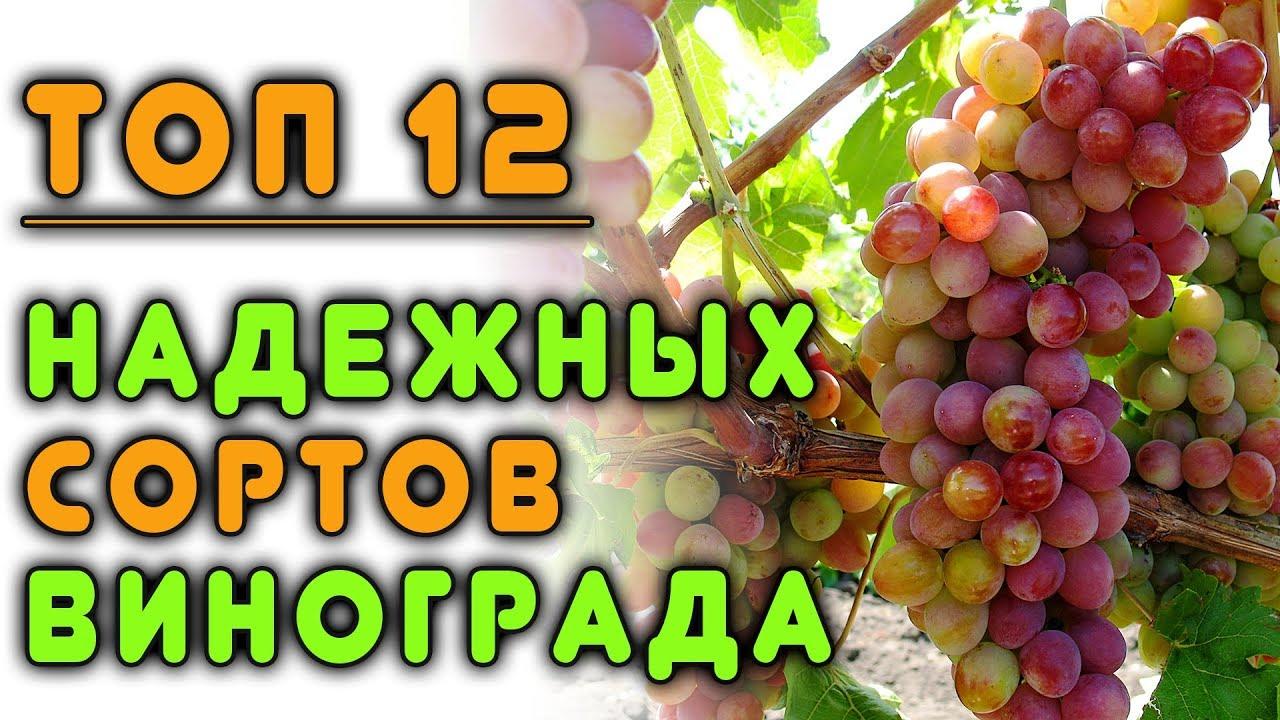 Описание и выращивание винограда сорта юлиан