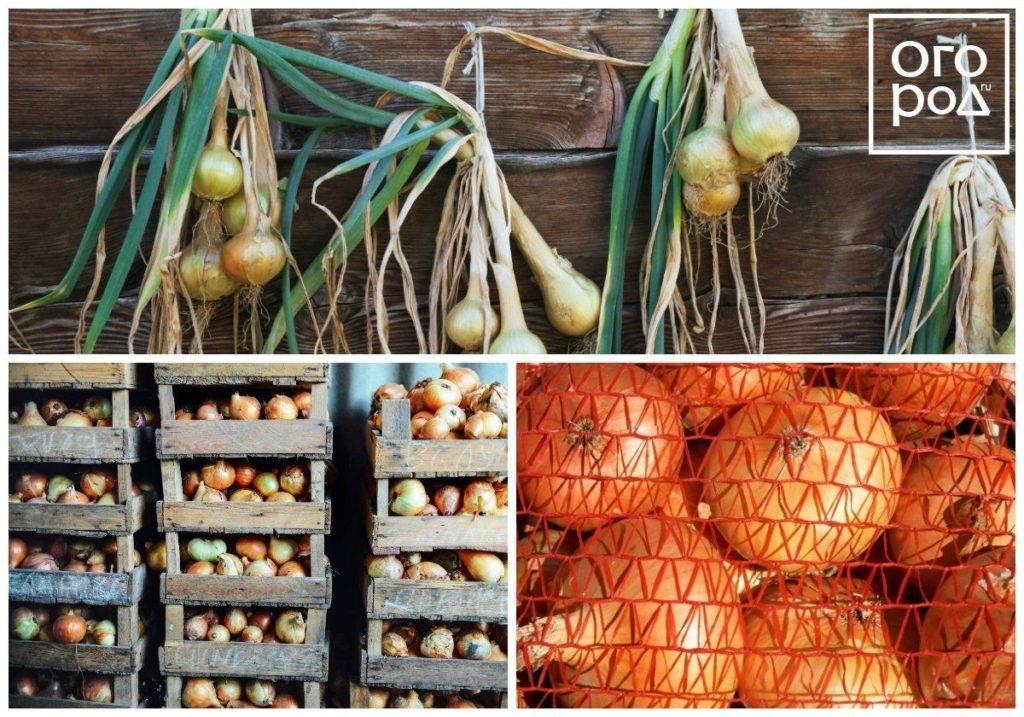 Как хранить морковь зимой в домашних условиях (8 способов)