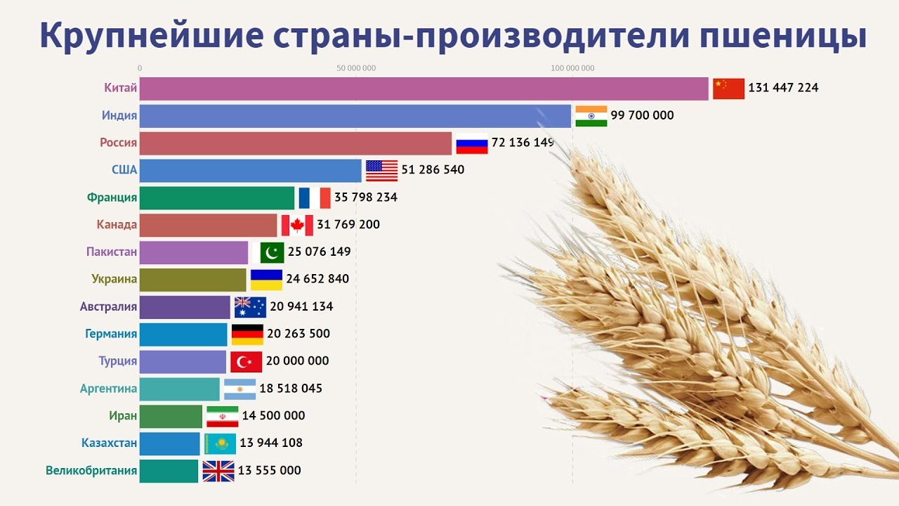 Выращивание кукурузы: сорта на зерно, технология в открытом грунте и теплице, уход с фото