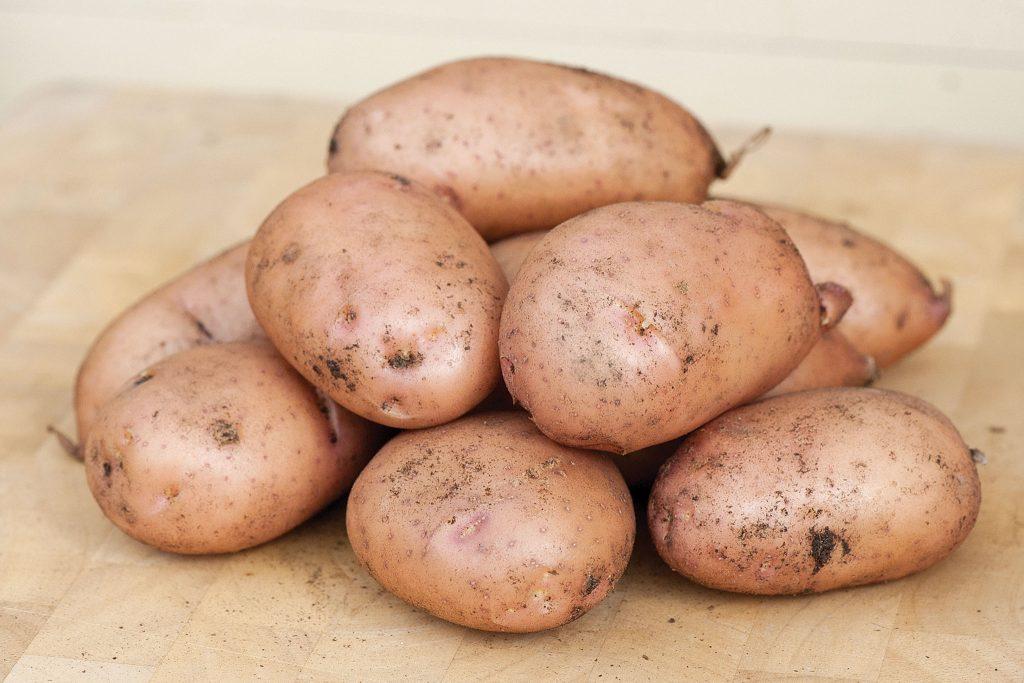Картофель жуковский ранний: описание и характеристика сорта, особенности выращивания, хранение, фото, отзывы