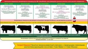 Свиньи дюрок — характеристика, происхождение, содержание и кормление, перспективы разведения. | cельхозпортал