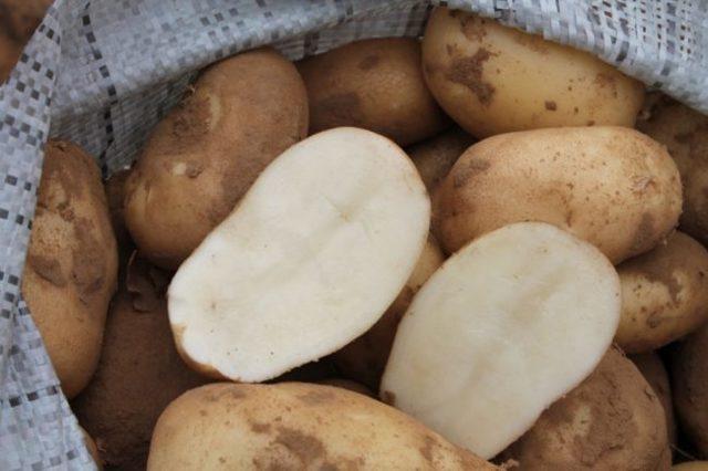 """Картофель """"сорокодневка"""""""