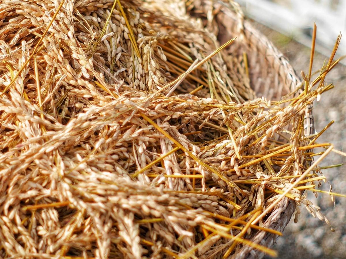 Компост на даче: экологично, полезно и красиво. компостирование по всем правилам!