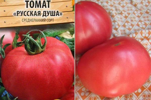 Описание томата русский богатырь, его характеристики и агротехника выращивания