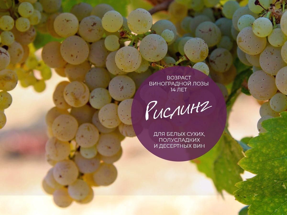 Путеводитель по винным гибридным сортам винограда