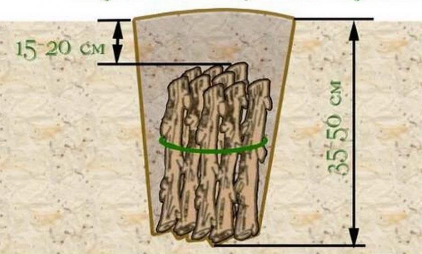 Все о размножении крыжовника: как размножить черенками, отводками и делением куста
