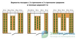 Схема посадки томатов в теплице: подробное описание