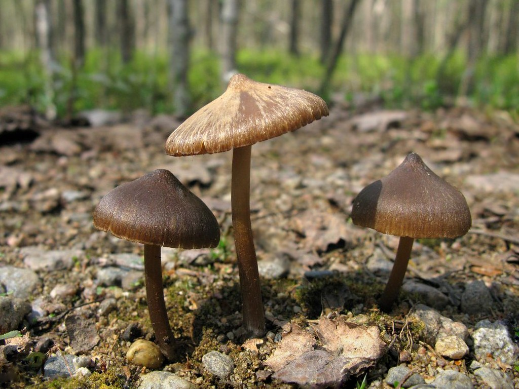 Какие грибы растут в подмосковье в октябре 2020 года