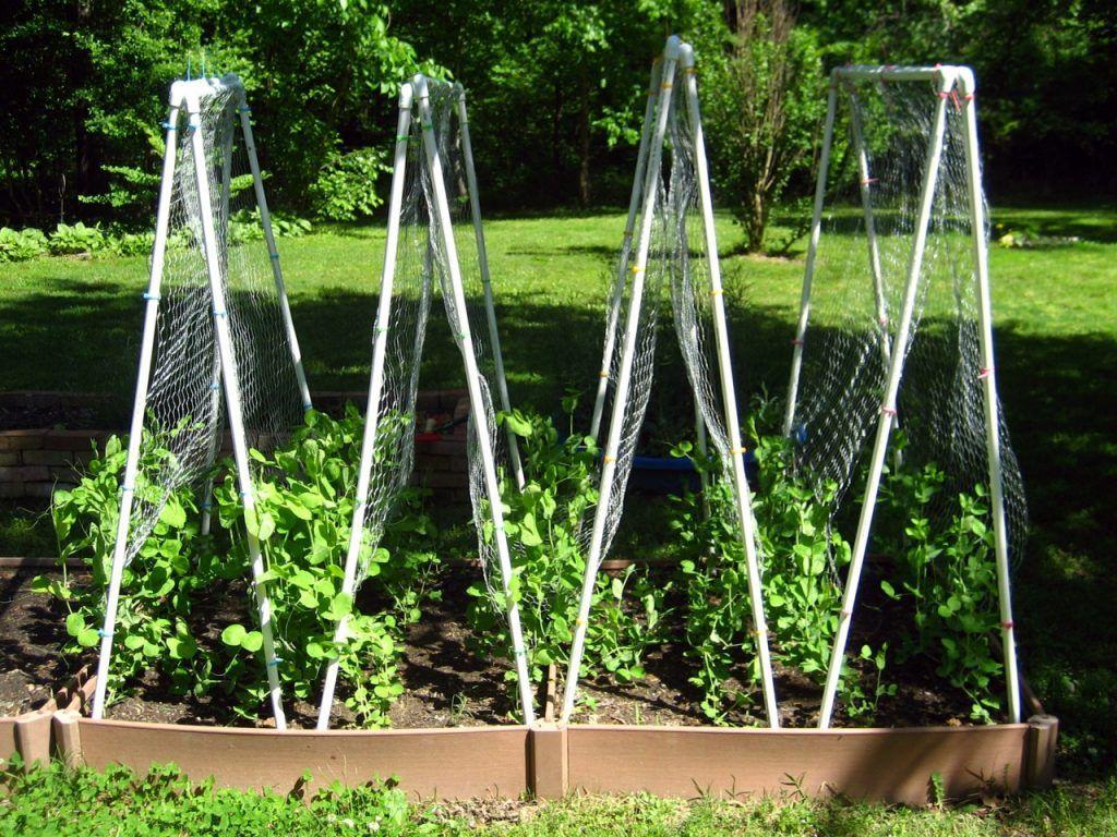 Шпалера для помидор | вырасти сад!