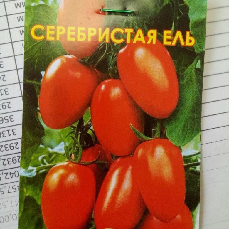 Томат голубая ель: описание и характеристика сорта, отзывы | tomatland.ru