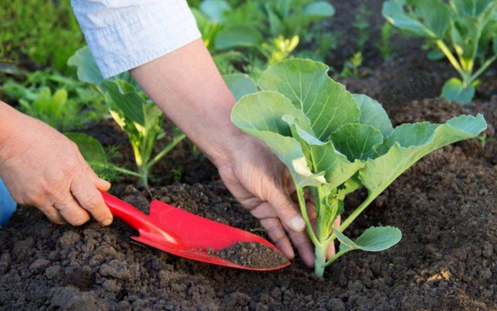 Что посеять в июне из овощей: 9 удачных идей