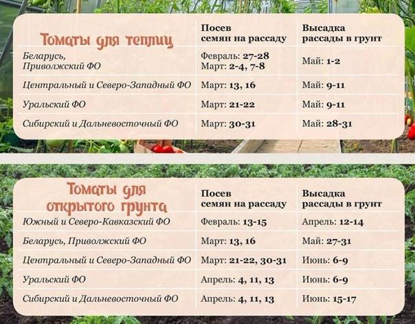 Когда садить помидоры на рассаду на урале - благоприятные дни 2021 года