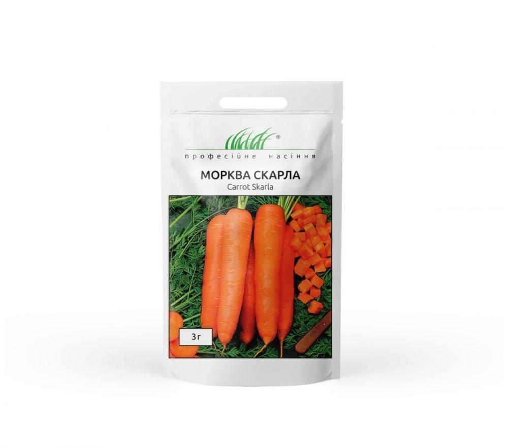 Самый урожайный: сорт моркови канада f1