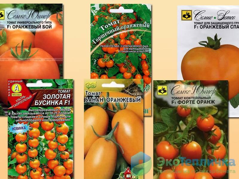 Лучшие сорта помидоров для открытого грунта, с фото и описанием