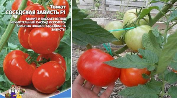 ✅ томат соседская зависть описание сорта фото отзывы - питомник46.рф