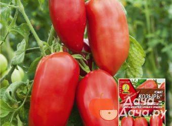 Томат сибирский козырь отзывы фото урожайность