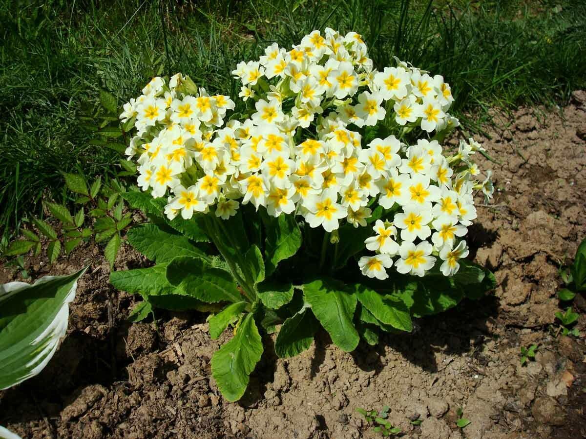 Выбор и посадка цветов на даче весной