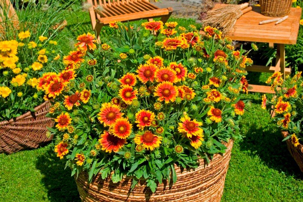 Лучшие многолетние кустовые цветы для сада: особенности и правила выбора