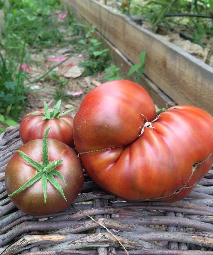 Необычный десертный сорт томатов «черный принц»