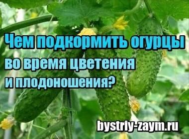 Чем подкормить огурцы во время цветения и плодоношения — советы и рекомендации экспертов как и чем подкармливать огурцы (95 фото)