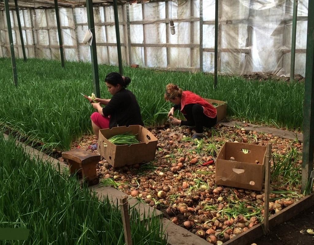 Выращивание саженцев как бизнес – бизнес-план питомника