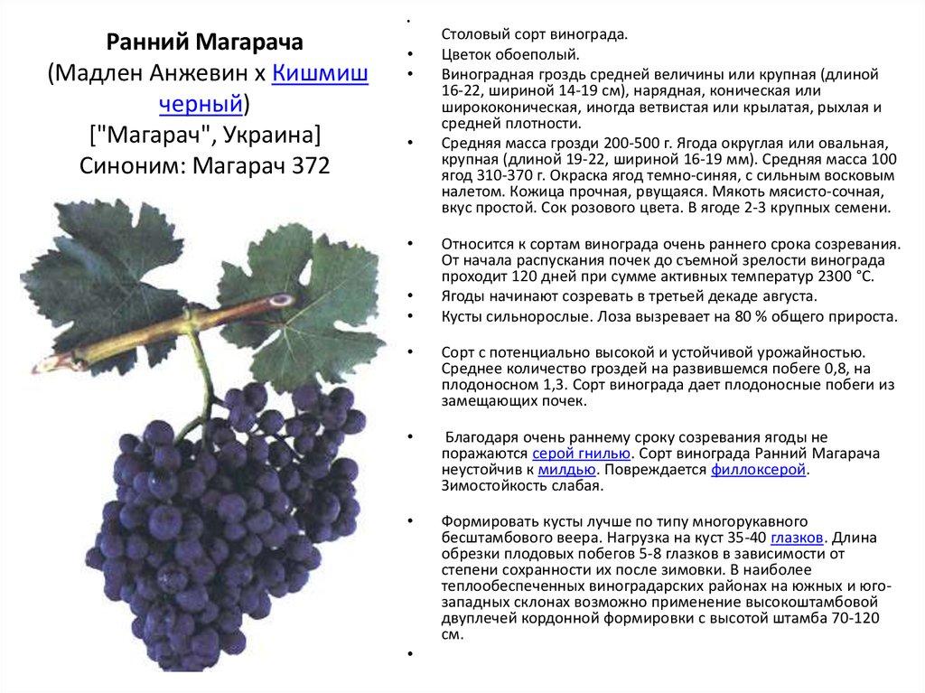 Виноград «сенсация»: описание сорта, его особенности и характеристика. агротехника выращивания сорта «сенсация»: посадка винограда и уход за лозой