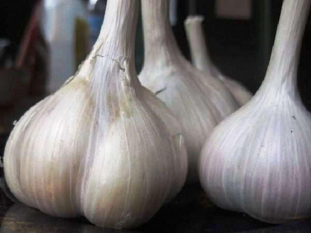 Описание сорта чеснока сибирский гигант, особенности выращивания и ухода