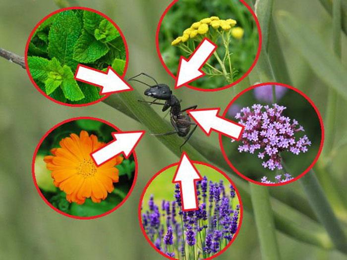 Как выгнать пчел с вашего участка