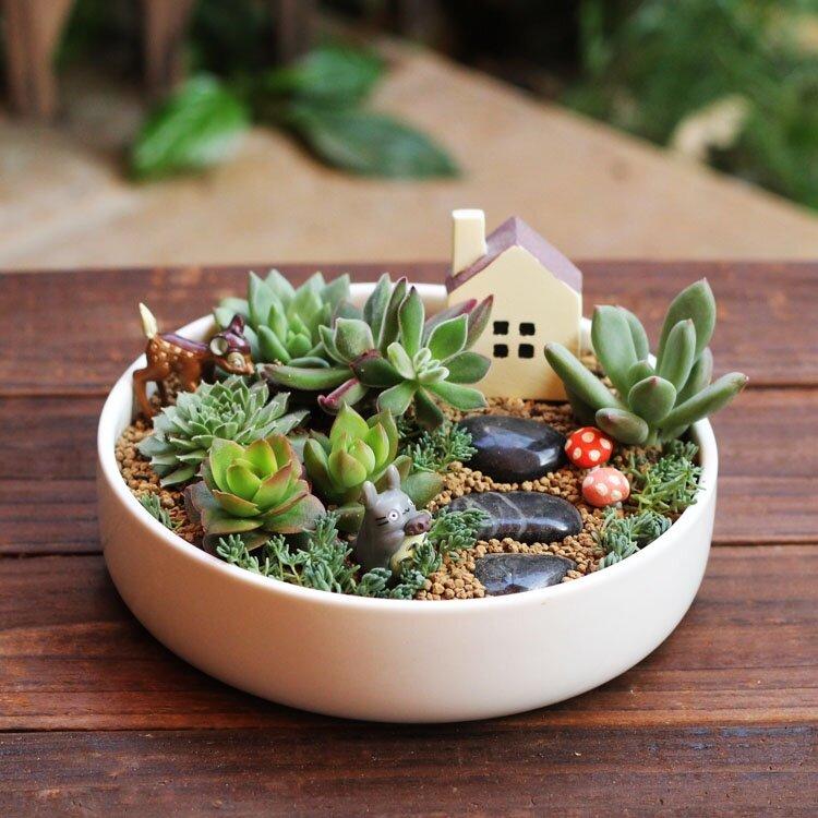 Создаем мини-сад в горшке: виды, выбор растений и правила составления композиции