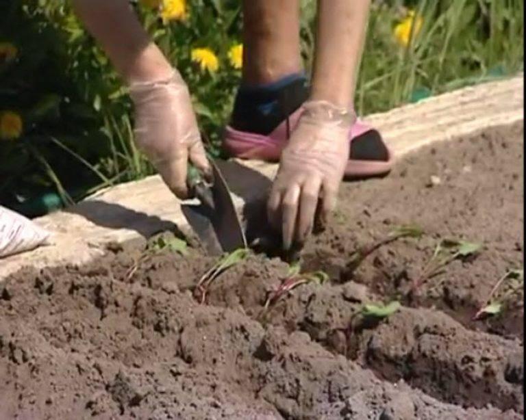 Соя: как растет, когда начинать посадку и общие сведения о технологии возделывания, выращивания на поле, посев, болезни, способы удобрения и внекорневой подкормки