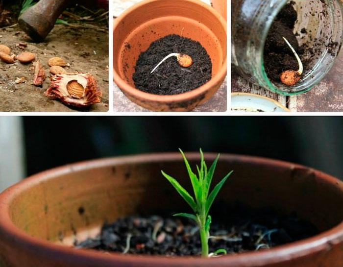 Как вырастить персик из косточки: пошаговая инструкция как посадить и вырастить персиковое дерево