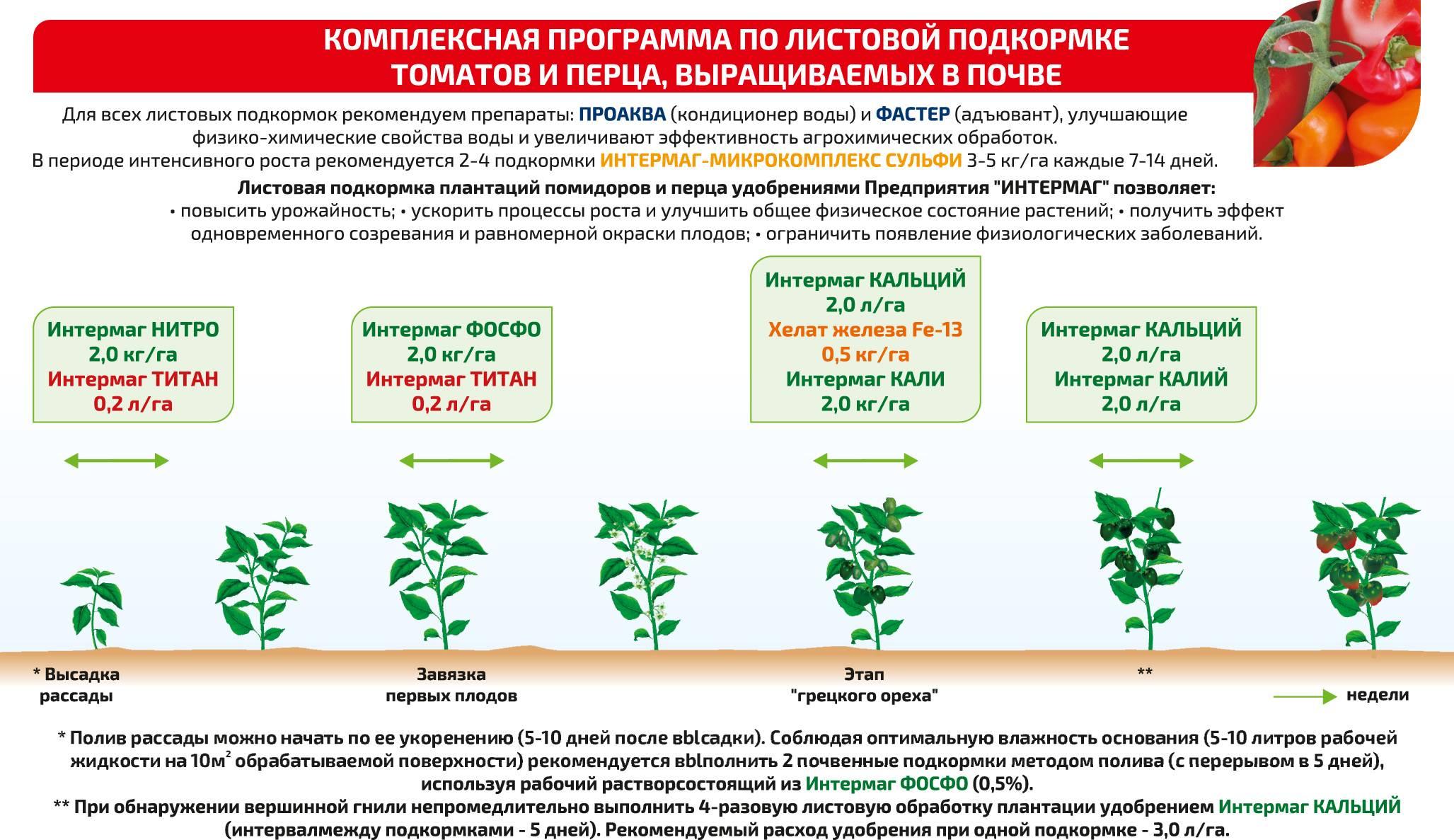 Подробно о том, как вырастить крупные помидоры. все, что нужно знать от выбора сорта до ухода за овощами