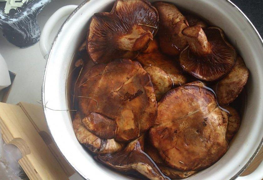 Грибы маринованные на зиму, 13 рецептов приготовления, способы маринования грибов