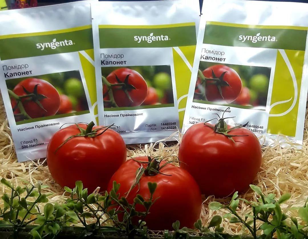 Описание сорта томата пелагея и его характеристики - всё про сады