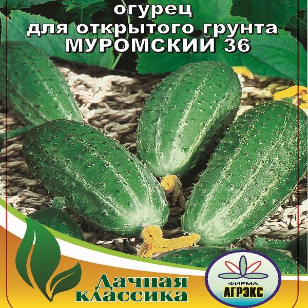 Выращивание огурцов под петербургом