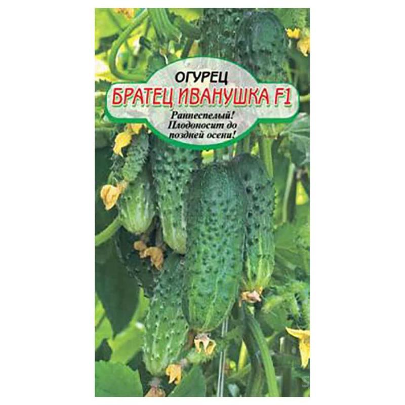 Огурец братец иванушка f1: описание и урожайность сорта, отзывы