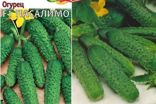 Огурец отелло отзывы фото описание - агро журнал pole39.ru