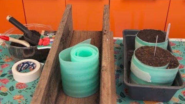 Как правильно посадить и вырастить рассаду помидоров из семян в домашних условиях: пошаговая инструкция, фото, видео