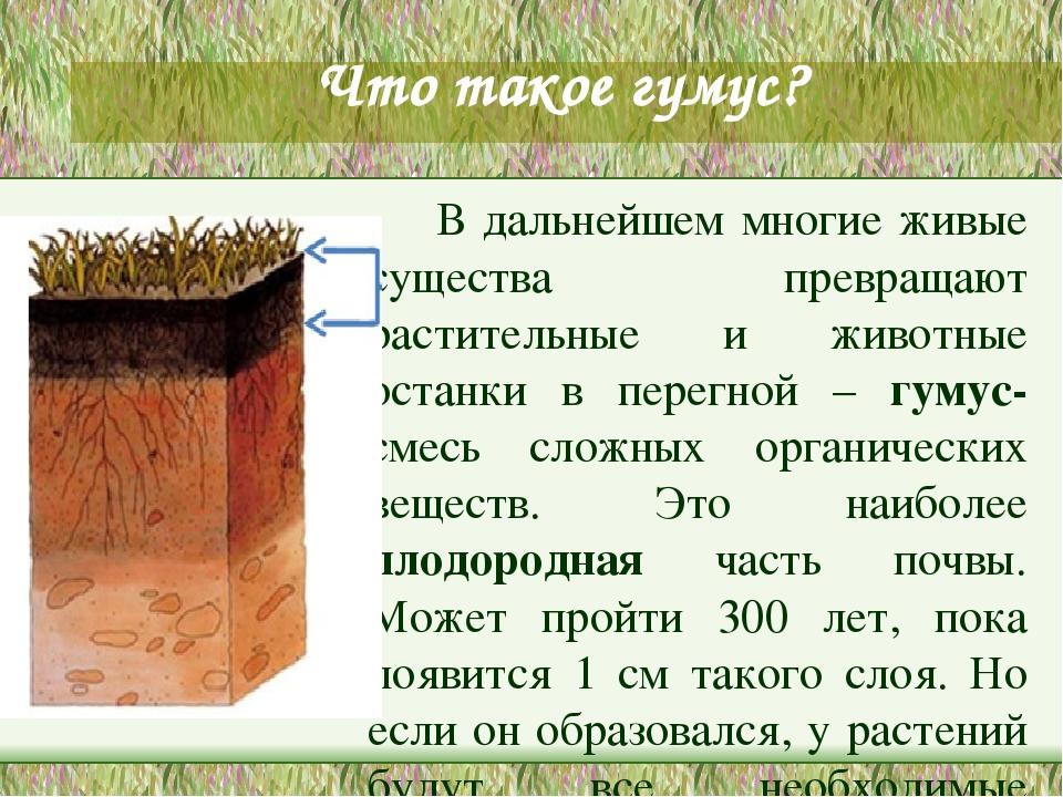 Перегной: свойства удобрения и польза для растений