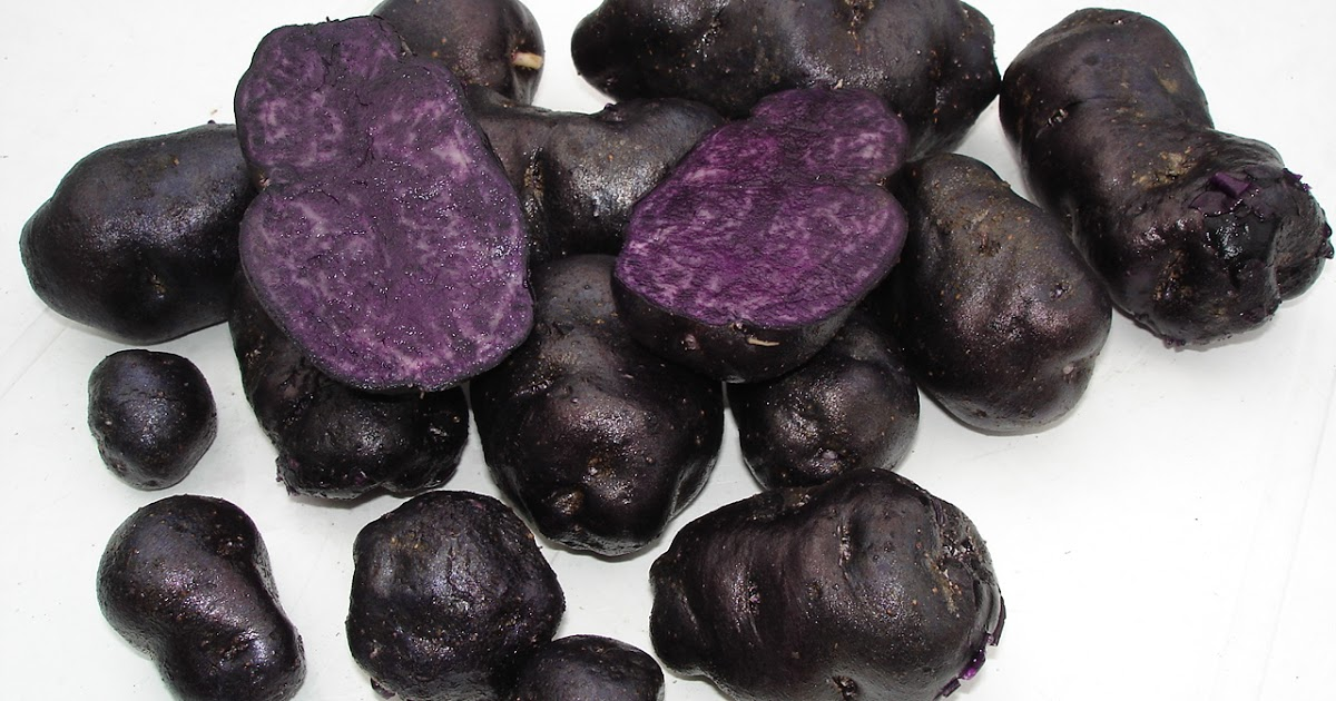 ᐉ фиолетовые сорта картофеля: названия, выращивание, готовка - roza-zanoza.ru